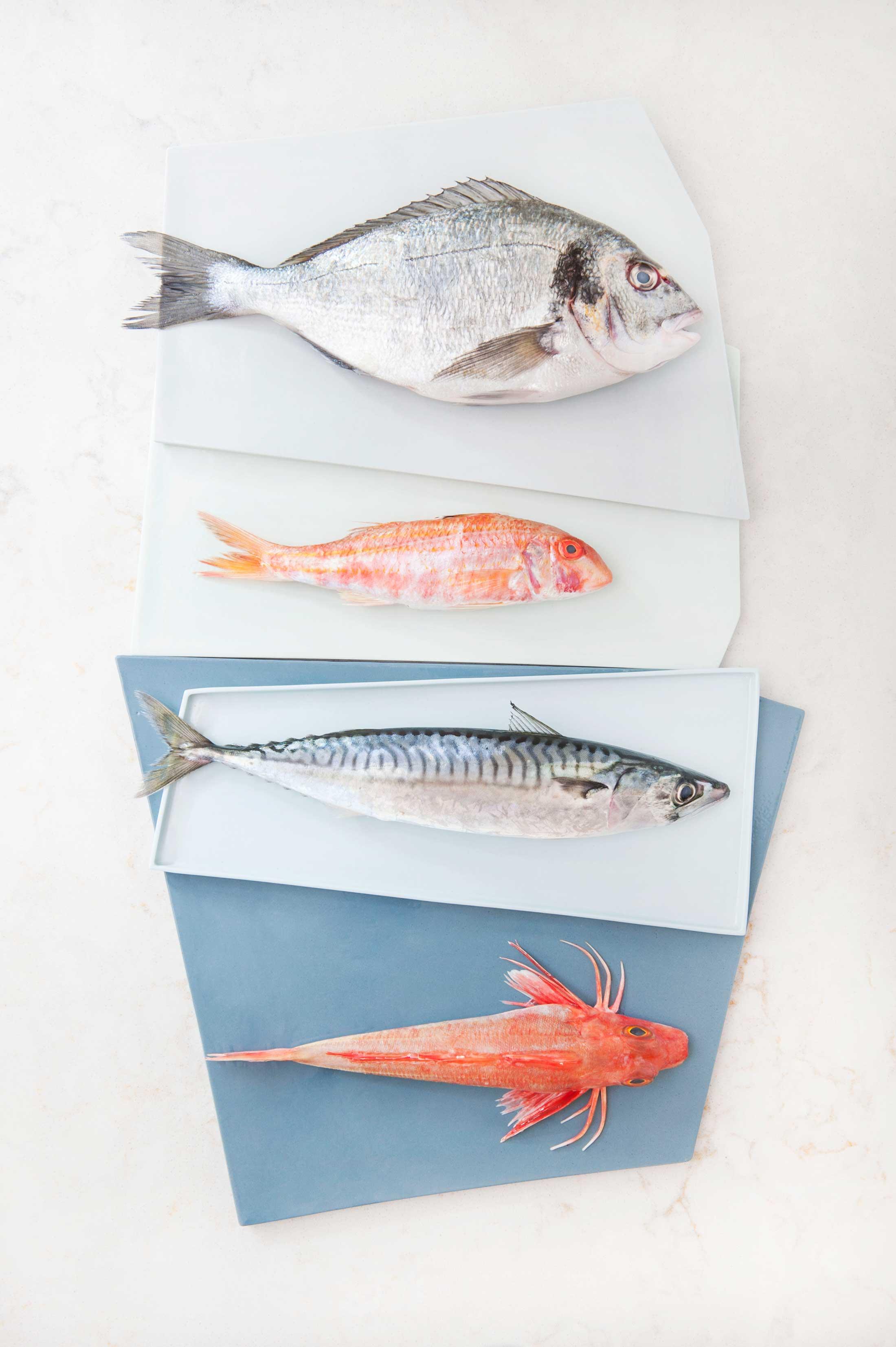 fish_site_02